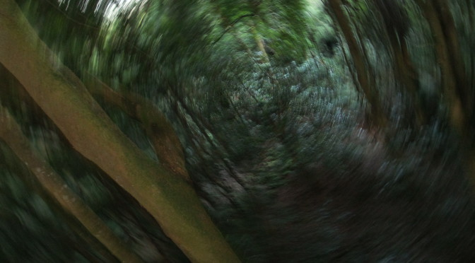 Dorrigo Nationalpark- Von feuchten Gebieten und schleimigen Saugern